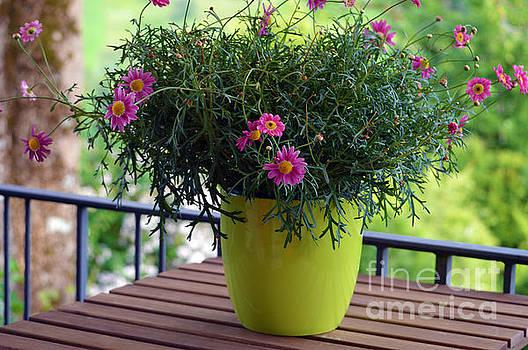 Susanne Van Hulst - Balcony Flowers
