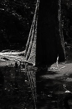 Bald Cypress-Congaree National Park by Brian M Lumley