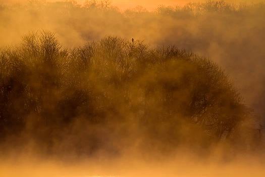 Bald Eagle - Sunrise by Greg Gard