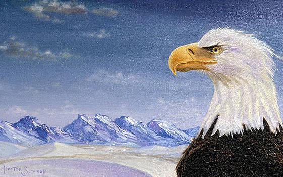Bald Eagle in Alaska by Hector E Soto