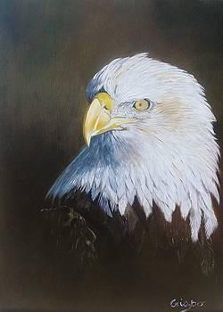 Bald eagle by Jean Yves Crispo