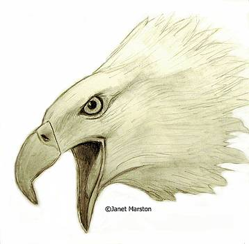Bald Eagle Pencil Drawing by Janet Marston