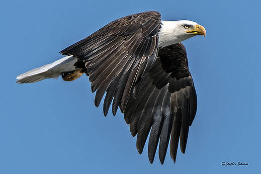Bald Eagle Power by Stephen Johnson