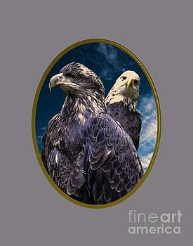 Bald Eagles by Mim White