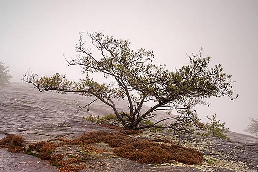 Bald Rock by Derek Thornton