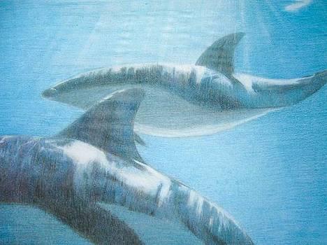 Baleias - Whales by Fabio Turini