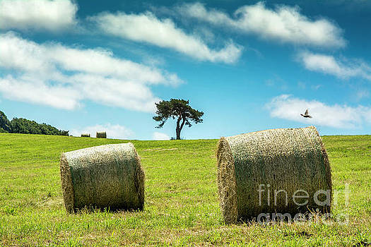 Bales of straw in a field, Auvergne, France by Bernard Jaubert