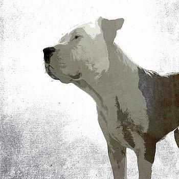 Bali The Dog by Filippo B