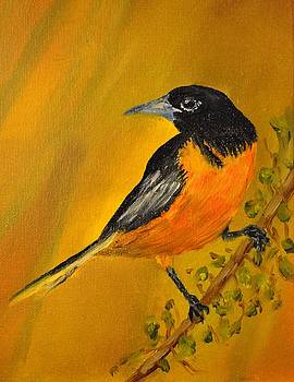 Baltimore Oriole by James Higgins