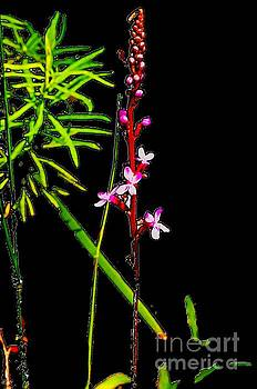 Bamboo and Flowers by Blair Stuart