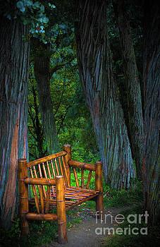 Svetlana Sewell - Bamboo Bench