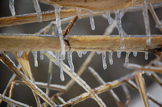 Bamboo Freeze by Eddy Bateman