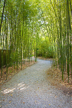 Bamboo Path 1 by Denise Keegan Frawley