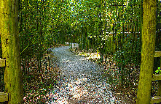 Bamboo Path 2 by Denise Keegan Frawley