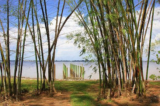 Bamboo View by John Rivera