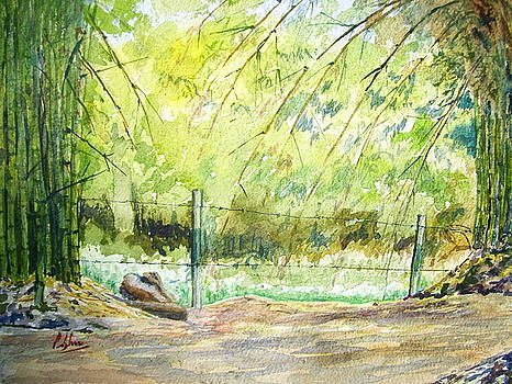 Bamboos by Prabhu  Dhok