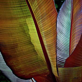 David Gordon - Banana Plant Leaves I Color