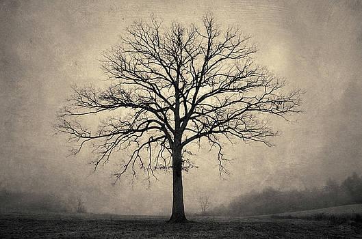 Bare Tree and Fog Toned by David Gordon