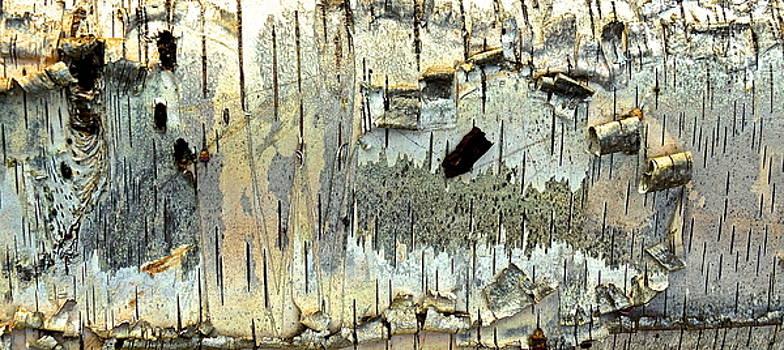 Bark Art by Wendell Lowe