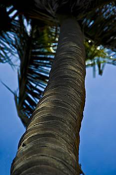 Barking Up The Wrong Tree by Sarita Rampersad