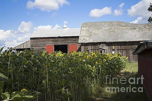 Barn Gazing by Tara Lynn