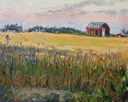 Barn in a Field of Grain by Ylli Haruni