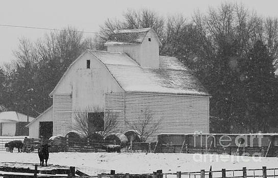 Barn of Beauty by J L Zarek