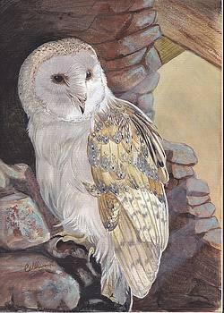 Barn Owl by Callie Smith