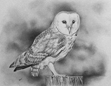 Barn owl by Ed Teasdale