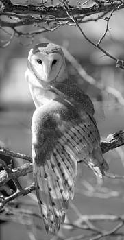 Barn Owl in Black and White by Tracy Winter