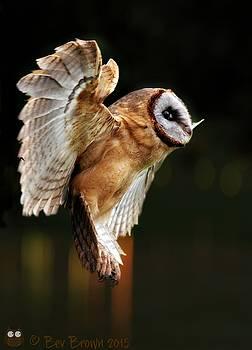 Barn Owl in Flight by Bev  Brown