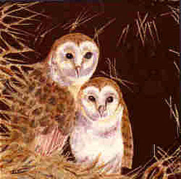 Barn Owls by Dy Witt