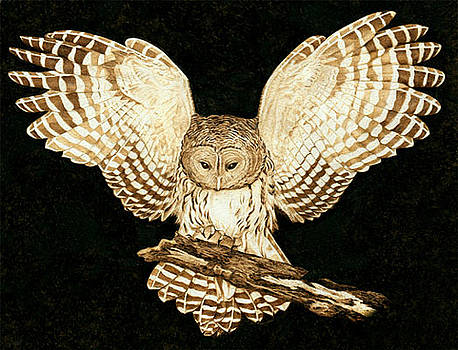 Barred Owl in Flight by Cate McCauley