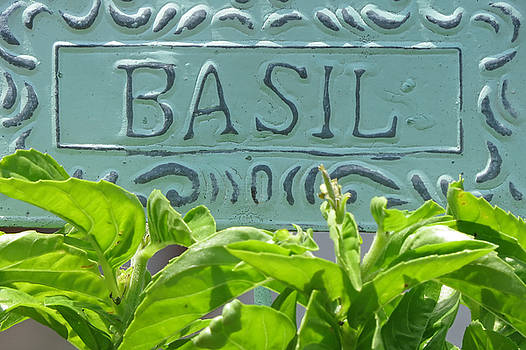 Basil by Jim Nelson
