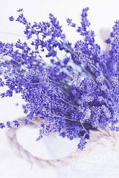 Basket of Lavender by Stephanie Frey
