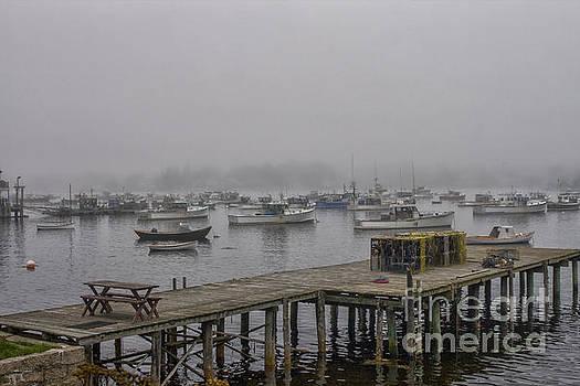Patricia Hofmeester - Bass Harbor, Acadia NP in fog