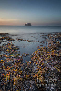 Bass Rock by Keith Thorburn LRPS