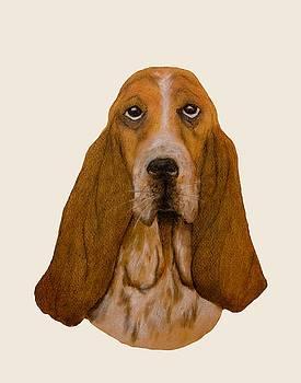 Basset Hound Portrait by John Stuart Webbstock