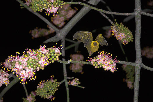 Bat by Jim Walls PhotoArtist