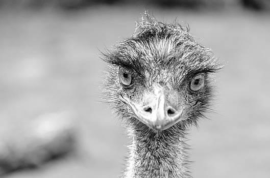 Battersea Emu by James Evans