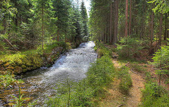 Bavarian Forest Stream by Sean Allen