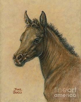 Bay Colt by Jane Bucci