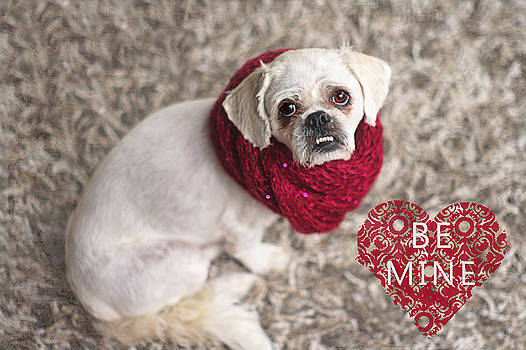 Be Mine Pekingese by Suzanne Powers