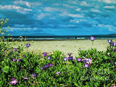 Beach Daisies by Karen Lewis