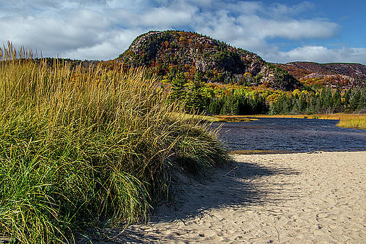 Beach Grass by Brent L Ander