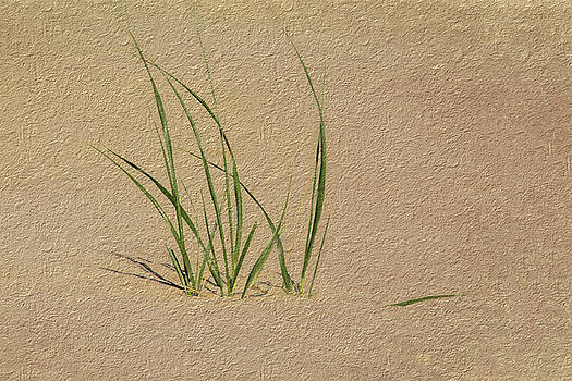 Beach Grass by Cathy Kovarik