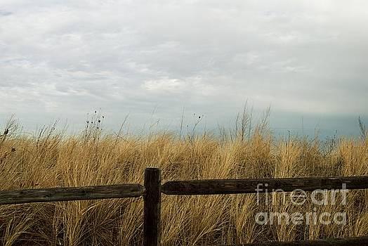 Beach Grass by Eunice Miller