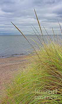 Beach Grass Sea Glass by Barbara McMahon