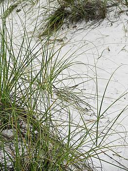 TONY GRIDER - BEACH GRASS