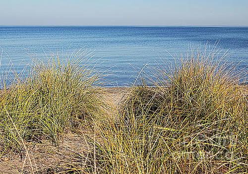Beach Grasses by Barbara McMahon
